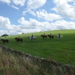 Tissington Trail Horses